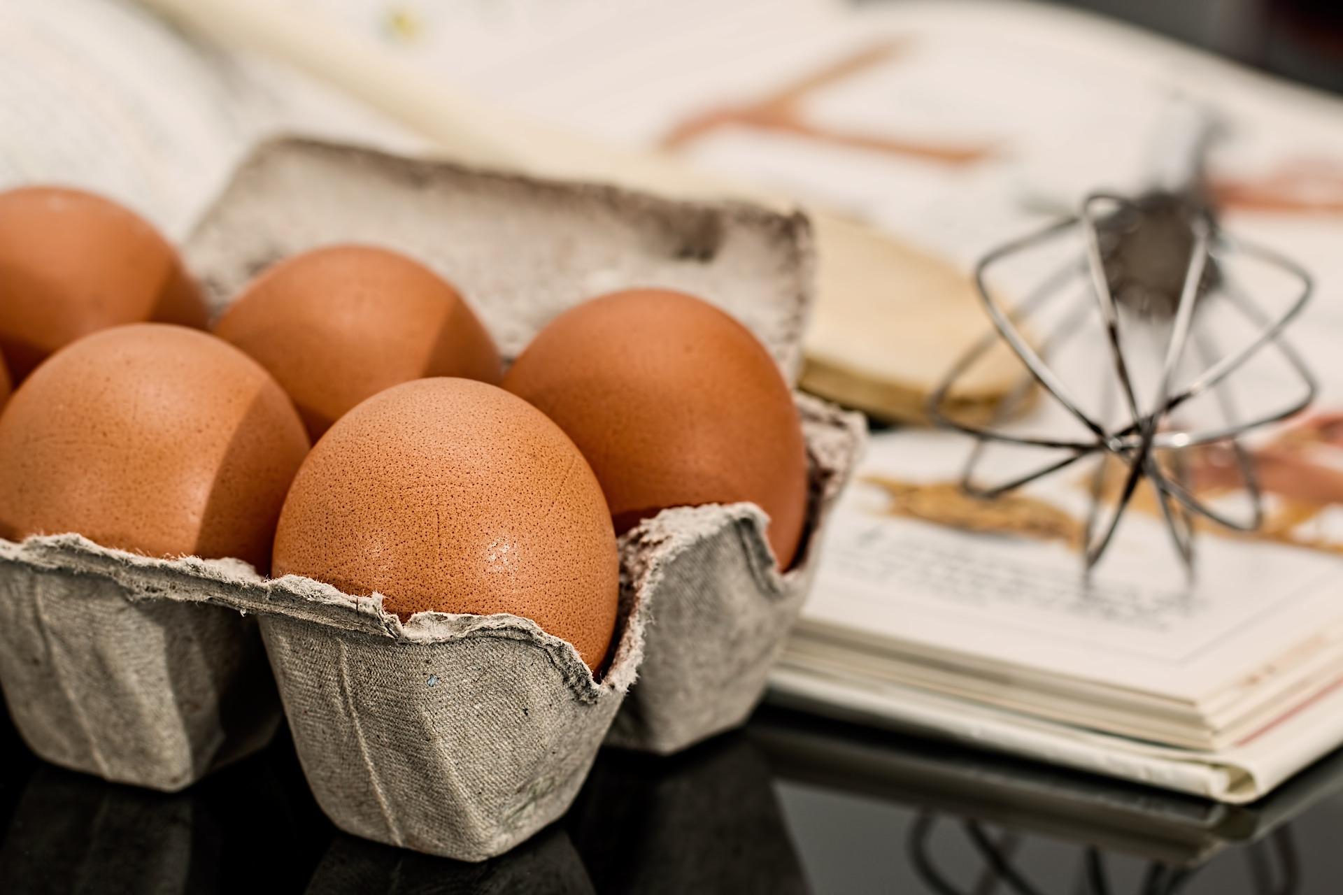 Pourquoi choisir des œufs bio?